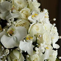 Floral Image1